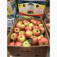 Оптовий продаж яблук з свого саду