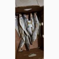 Продам сушеную вяленую рыбу оптом. Ассортимент