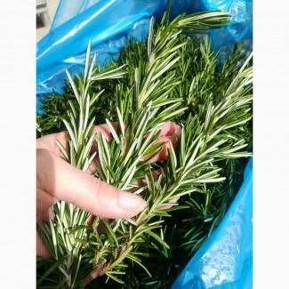 Предлагаем Вам салаты и пряные травы с Италии