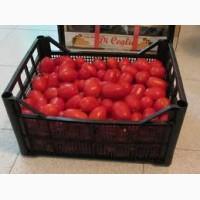 Оптовая продажа реализация помидоров томаты доставка