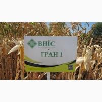Семена кукурузы Гран 1 (ФАО 370) напрямую от ВНИС
