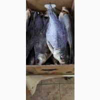 Продам копченую рыбу в ассортименте. Лещ, толстолоб, сом, сом клариевый (африканский)