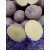 Продам оптом картофель из Польши