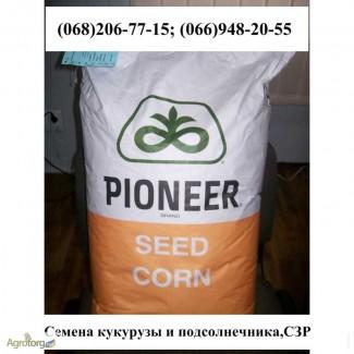 Семена кукурузы Монсанто ДК 315, G Host, Пионер