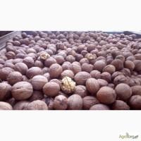 Куплю грецкие орехи