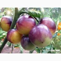 Семена лучших любительских и коллекционных сортов томата