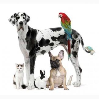 Veterinariya. info ветеринарная аптека, оптовые поставки ветеринарных препаратов