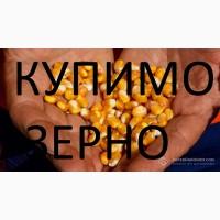 Закуповуємо кукурудзу постійно!! не кондицію, вологу, биту