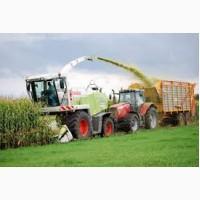 Заготівля багаторічних трав на сінаж та кукурудзи на силос комбайнами Ягуар