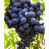 Продам виноград отменного качества