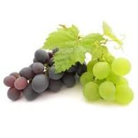 Куплю виноград по опт.ценам от производителя