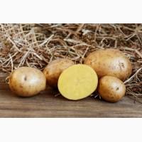 Продадим картофель по оптовым ценам