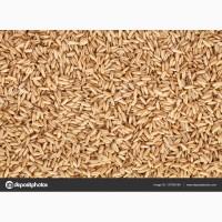 Семена/Посевной материал Овёс Мустанг