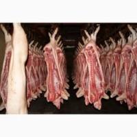 Продам свинину высшего качества оптом от 1 тонны