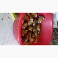 Продаю Білі сушені гриби