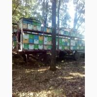 Продам мед соняшниковий та лісовий
