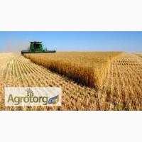 Закупаем пшеницу по Винницкой и Хмельницкой обл