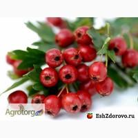Продам Боярышник (ягода)