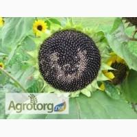 Семена подсолнечника СУР (ультраранний)