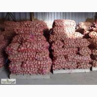 Продам картошку от 1 т. 3.7! Овощи-Фрукты в ассортименте! Опт! Доставка