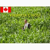 Семена канадской кукурузы Джи Хост