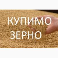 Підприємство купує дорого пшеницю фуражну