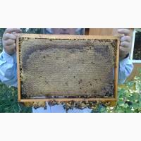 Бджолопакети, бджолосімї