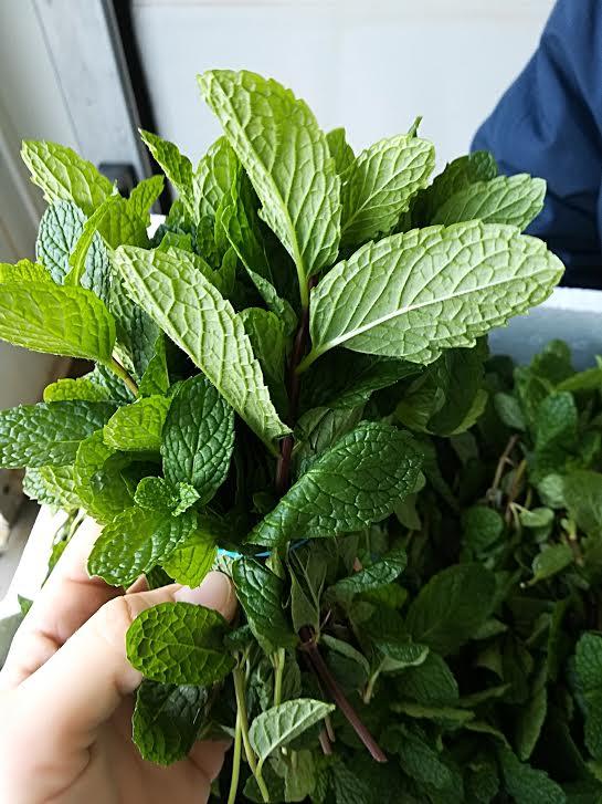 Фото 4. Salads and herbs