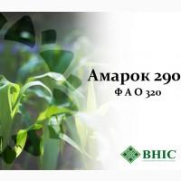Насіння кукурудзи Амарок 290 (ФАО 320)