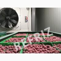 Шокова заморозка ягід продаю зі склада обладнання 400 кг/година