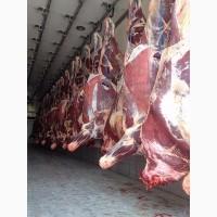 Frozen Beef meat FOB Black sea