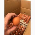 Продам яйцо куриное с0 С1 С2 С3
