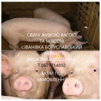 М#039;ясо Свинина свині домашні живою та розруби з Доставкою Мироніка+50км
