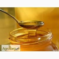 Продаж меду оптом і в роздріб