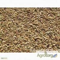 Продам семена суданки Белявка по цене 7 грн/кг. (на объеме договорная)
