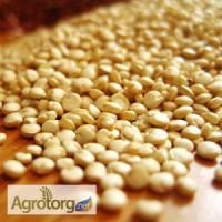 Семена Киноа оптом от 190 грн/кг. Бесплатная доставка