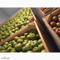 Купим яблоко на переработку от населения по Украине