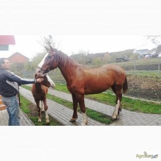Продам кобилу з лошаком. можливий торг