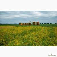 Високоякісне насіння сої селекції Соєвий Вік