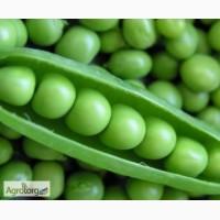 Продам семена гороха сахарного, опт и розница
