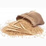 ЗАКУПАЕМ зерновые культуры любого качества
