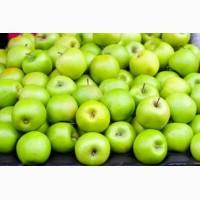 Куплю яблоко от 20т