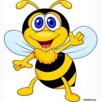 Покупаю мед в Запорожской обл от 3-рех т