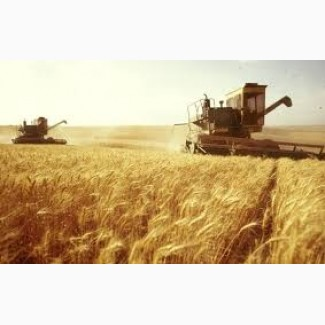 Экспорт зерновых, зернобобовых, масличных и др. культур в страны ЕС (зерно, кукуруза и тд