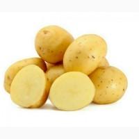 Продажа картофель посадочный продажа посадочного картофеля оптом