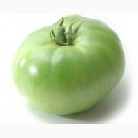 Продам Зелёный помидор ОПТОМ