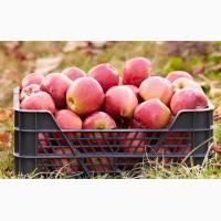Скупка яблок. Продать яблоки