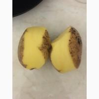 Продаем картофель отличного качества большими объемами. Возможна доставка