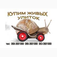 Куплю улитку (равлики) виноградную. Харьков и Восточная Украина