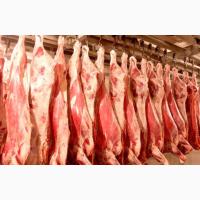 Купимо яловичину